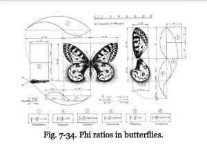 phi butterfly
